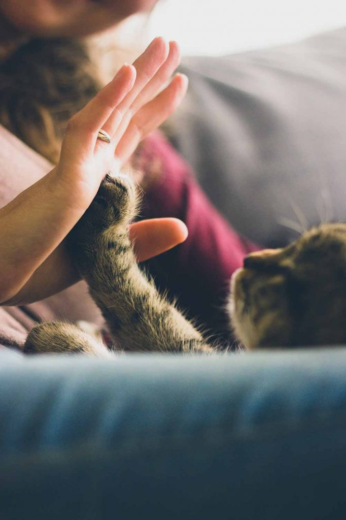 a woman touches her hand to a cat's paw